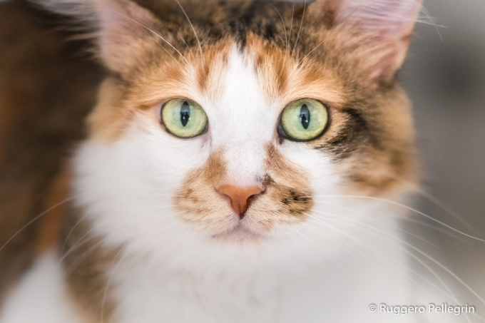 5 Steps for your Pet Photography athome